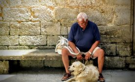 Dogs and Seniors: A Healthy Partnership