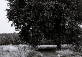 Amazon trail with tree