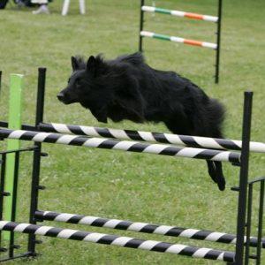 Tira jumping