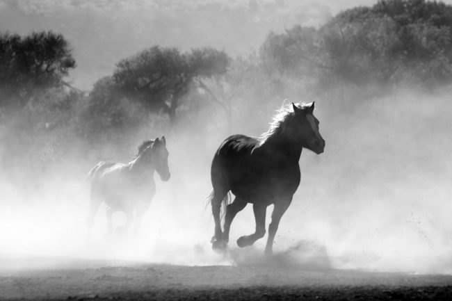 A herd of horses running